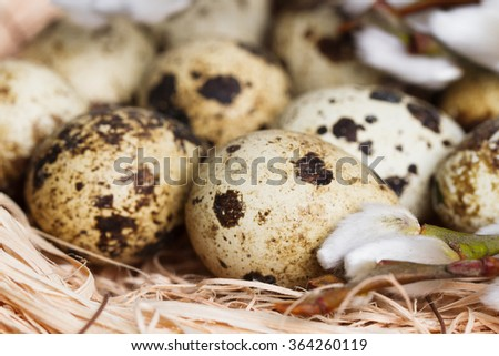 Quail eggs in nest selective focus
