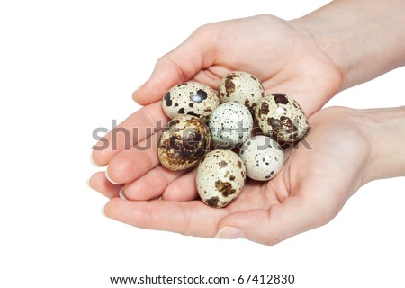 Quail eggs in the hands. Isolated on white.