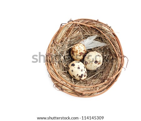 Quail eggs in the nest - stock photo