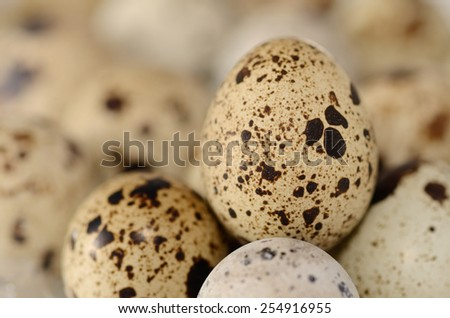 Quail eggs. Macro shot with selective focus - stock photo