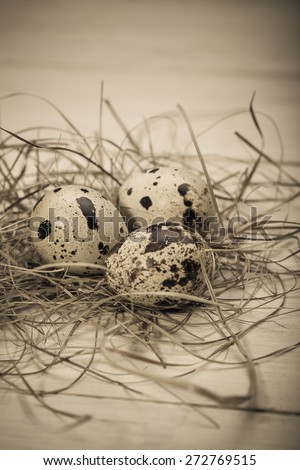 quail eggs on the background of hay - stock photo