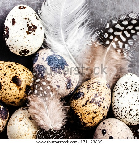 Quail eggs with feathers on vintage grey scratched textured  background with copy space for text. Easter decorations on gray and white board, macro. - stock photo