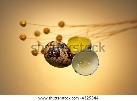 Quail eggs with herb - stock photo