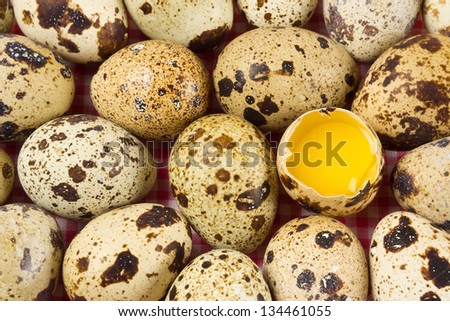 Quail mottled eggs close up