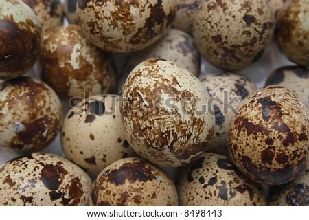 Quail's Eggs - stock photo