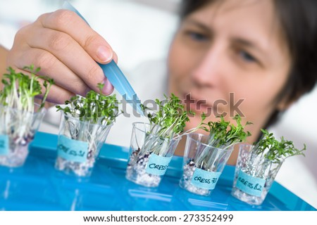 Quality control. Senior scientist or tech picks cress sprouts for testing. Shallow DOF, focus on the forceps - stock photo