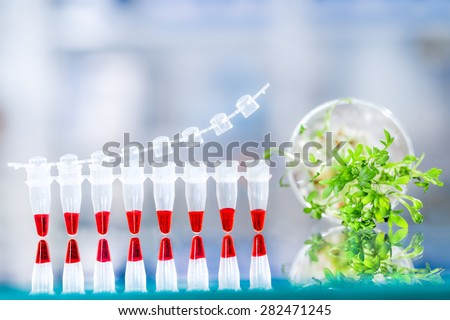 Quality control with DNA amplification test, PCR strip for this assay and sample of cress salad for the testing. Space for your text - stock photo