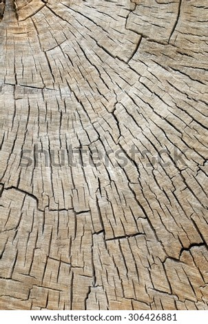 Quarter Cross Section of a Old Decaying Cotton Wood Tree Showing Tree Rings and Cracks - stock photo