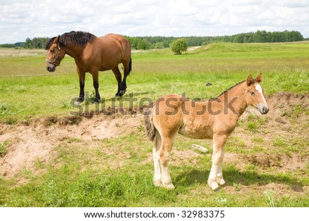 Quarter horse mare caring for her newborn foal - stock photo