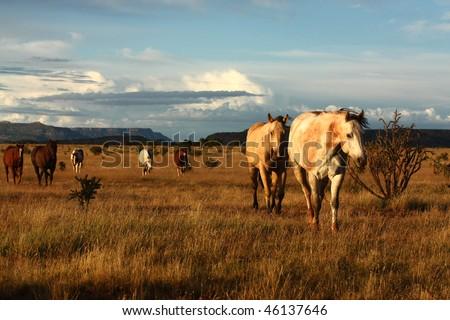 quarter-horses on the prairie in New Mexico, USA - stock photo