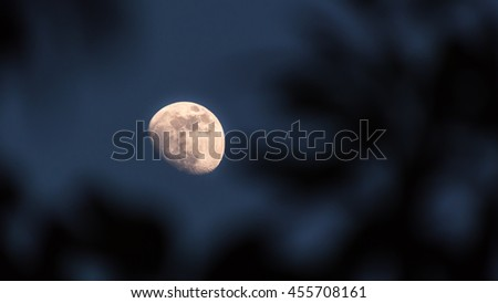Quarter moon with trees as a foreground