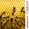 Queen bee is always surrounded by the workers - their servant - stock photo