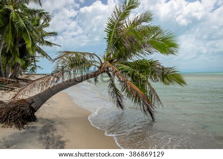 Quiet and deserted beach with lots of palm trees along the shore. Beautiful landscape in Thailand. Asia. - stock photo