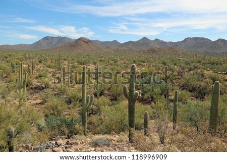 Quiet and very wild Sonoran desert with cactus in the Saguaro National Park - stock photo