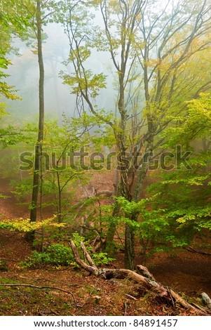 quiet autumn forest in a mist - stock photo