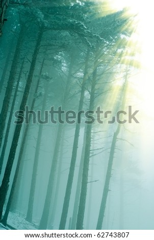 quiet misty forest in a green fog and pushing through sun rays - stock photo