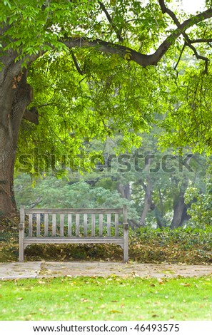Quiet park bench below beautiful huge tree