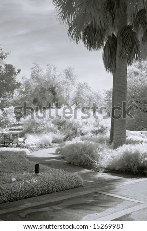 Quiet Park with Palm Tree in Infrared