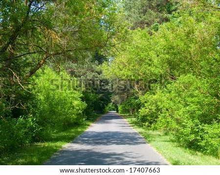 Quiet road lined by lush trees and foliage