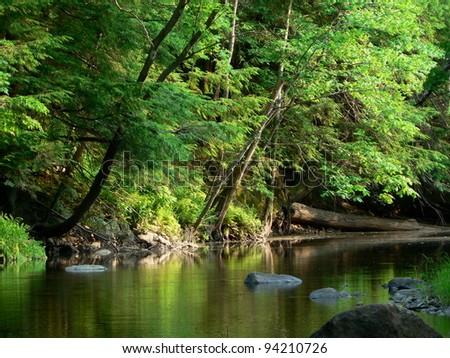 Quiet stream in the woods. - stock photo