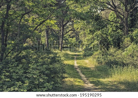Quiet walking footpath among green bushes and shady trees in the pinewood forest on the Pialassa della Baiona brackish lagoon near Marina Romea along the  Adriatic seaside in Ravenna (Italy) - stock photo