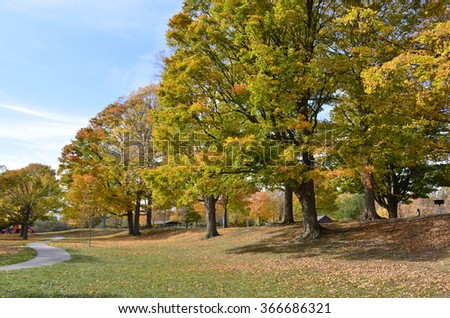 Quiet walking path in the park on a sunny autumn day with colorful leaves on the green grass