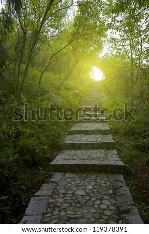Quiet woods corridor - stock photo