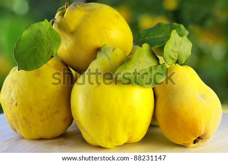 quince on a green background