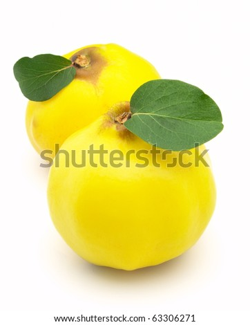 Quince with leaves