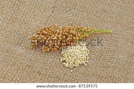 Quinoa plant and grain - stock photo