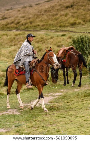 QUITO, ECUADOR - JAN 4, 2015: Unidentified Ecuadorian man riding a beautiful brown horse. 71,9% of Ecuadorian people belong to the Mestizo ethnic group