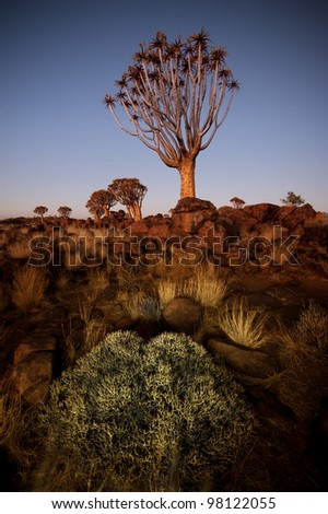 Quiver tree landscape in Namibia taken at dawn - stock photo