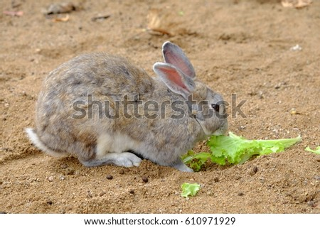 Rabbit Burrow Stock Images, Royalty-Free Images & Vectors ...