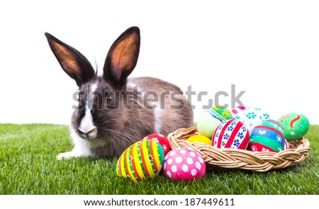Rabbit and easter eggs in green grass - stock photo