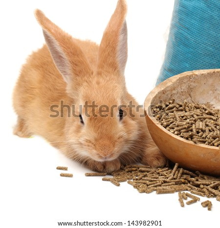 Rabbit and rabbit feed on white background - stock photo