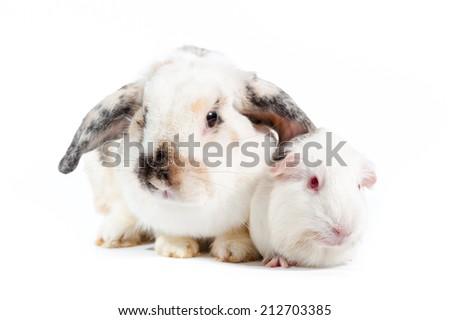 rabbit and rat family couple - stock photo