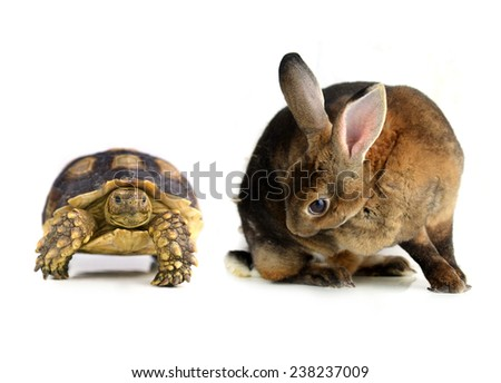 rabbit and  turtle  on a white background - stock photo