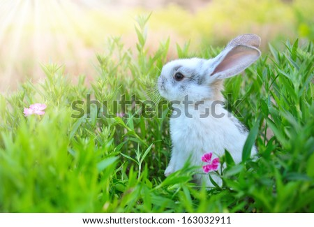Rabbit. Cute Little Easter Bunny in the Meadow. Spring Flowers and Green Grass. Sunbeams - stock photo