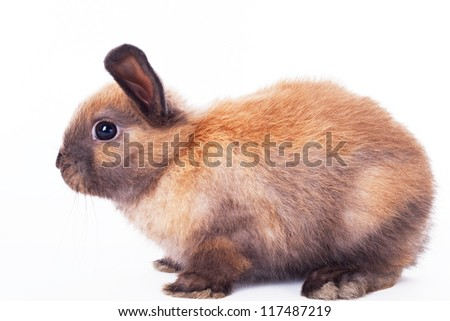 Rabbit i on a white background