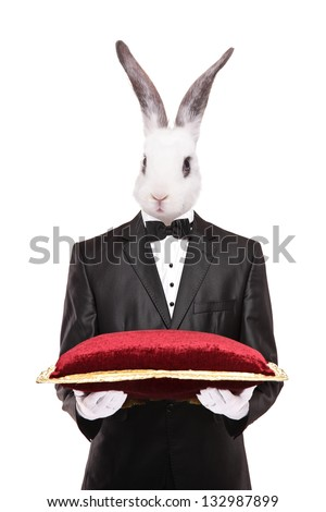 Rabbit in a suit holding a red velvet pillow isolated on white background - stock photo