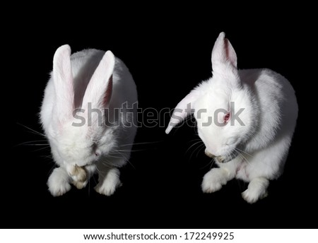 Rabbit in action on black background