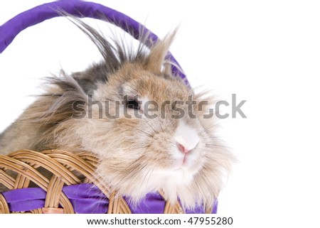 Rabbit in basket