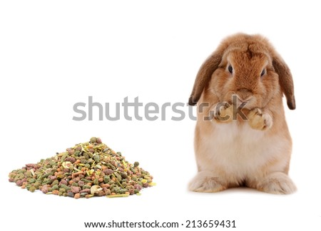 rabbit in  Food isolated on a white background - stock photo