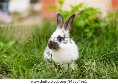 Rabbit in green grass on the farm - stock photo