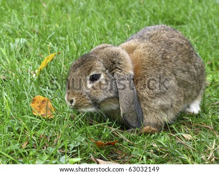 rabbit in green grass while eating - stock photo
