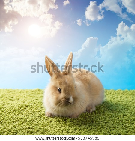 Rabbit in green grass with blue sky