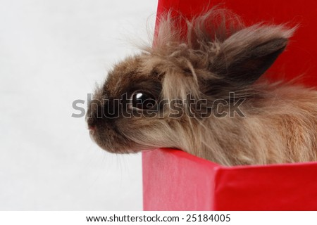 Rabbit in red box