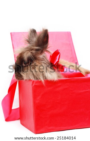 Rabbit in red box with red ribbon - stock photo