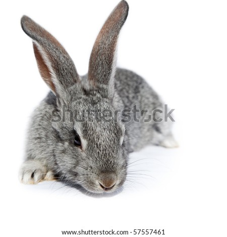 Rabbit in studio against a white background. - stock photo