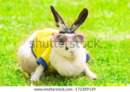 rabbit in Sunglasses in the park - stock photo